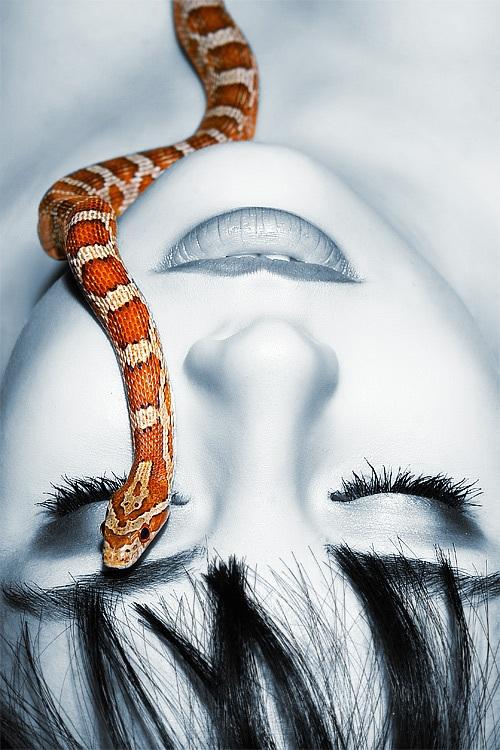 jad węża